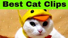Cats Do Funny Things Video - Cats Do Weird Things Video Short movie made from funny gifs Funny Cat Videos, Funny Cats, Cat Gif, Cool Cats, Pikachu, Gifs, Funny Kitties, Gifts, Cute Cats