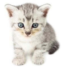 JW Pets Company Inc is one of the world's leading producers of pet toys. This page showcases some of the best  cat toys available to buy online....