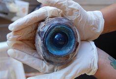 Giant eyeball found on beach.