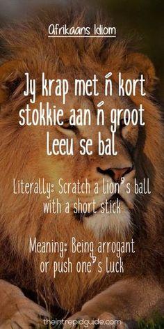 afrikaans expressions Jy krap met n kort stokkie aan n groot leeu se bal