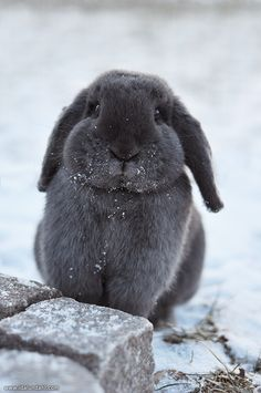 Cutest grey Snow Bunny~ by Ida Lundahl