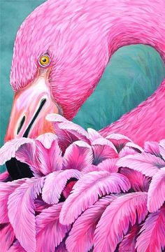 Flamingo Feathers                 (PRINT) by Tim Marsh  ~ 18 x 12