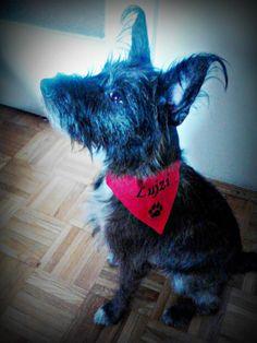 Nyuszi-kutya és az ő piros kendője :)
