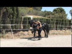 ▶ The Beautiful Friesian Horse Part 1 - YouTube