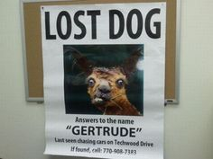 These Lost And Found Pet Posters Are So Funny, You Won't Believe They're Real: These Lost & Found Pet Posters Are So Funny, You Won't Believe They're Real