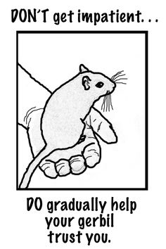 gerbil in hand coloring page gentleness