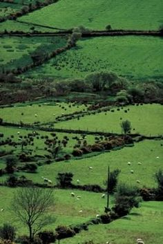 The legendary greenery of Ireland. It is the best travel time to go.