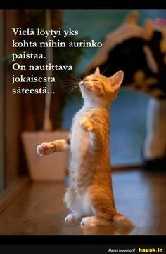 """""""Me when I smell coffee brewing"""" Crazy Cat Lady, Crazy Cats, Coffee Meme, Coffee Quotes, Cat Quotes, Cat Crafts, Cat Love, Funny Posts, Make You Smile"""