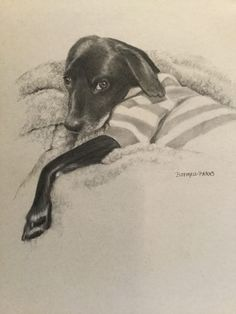 Beautiful fine art for sale and art instruction for beginners to advanced students in Southwest Missouri. Black And White Portraits, Art For Sale, Charcoal, Moose Art, Fine Art, Gray, Paper, Animals, Beautiful