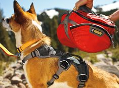 Fantastic dog pack with removable saddle bags and two 1L collapsible water bottles... Biggest issue on hikes is making sure Jack Dog has enough water!