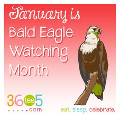 It's Bald Eagle Watch Month! Wacky Holidays, Love Holidays, Special Day Calendar, January Month, Eagle Watch, Awareness Campaign, How To Know, Bald Eagle, Breakup