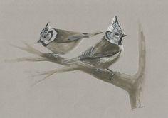 I Draw Austrian Birds | Bored Panda