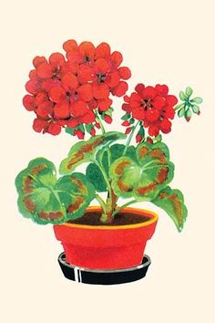 Red flowers on a geranium in a pot. In the 1930's the classic homemaker could purchase decals, applied by water, to decorate the kitchen, furniture, or anything else they desired. These are samples di