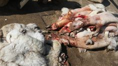 Petition · David Cameron MP: Ban the sale of imported fur in the UK · Change.org