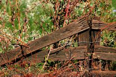 old fences pictures - Bing Images