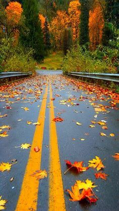 Travel Discover Road for scenic fall drive. Beautiful World Beautiful Places Seasons Of The Year All Nature Autumn Nature Belle Photo Parks Country Roads Colours Beautiful World, Beautiful Places, All Nature, Autumn Nature, Autumn Fall, Autumn Scenery, Hello Autumn, Seasons Of The Year, Fall Season
