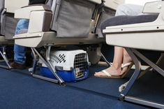 A empresa aérea Gol passou a permitir que cães e gatos de pequeno porte sejam transportados na cabine, juntamente com...