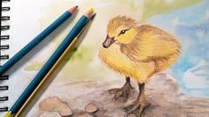 Duckling in Watercolor Pencil Real Time Sketch Along!