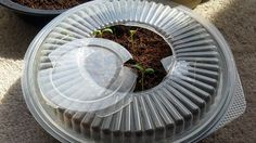Mini greenhouse from take out container. Great from starting seedlings.