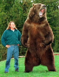 """""""Bart THE Bear!"""" Trained By Doug & Lynn Seus: Was An Alaskan Kodiak Bear, Born in 1977 Died in 2000 at The Age of He Appeared in Several Movies: """"Grizzly."""" """"Day of The Animals."""" """"Growing Up Grizzly."""" & """"Legends of The Fall."""" He Grew to & Weighed Pounds. Large Animals, Animals And Pets, Funny Animals, Cute Animals, Bart The Bear, Love Bear, Big Bear, Bear Pictures, Animal Pictures"""