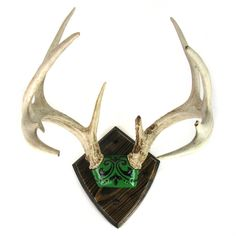 Custom Mounted 8 Point Deer Antlers w/ Carved and Painted Green + Black leather decoration by Ruby + George