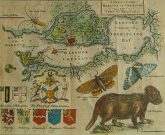 Porcupine Map - Early map of Halifax by Moses Harris The map includes illustrations of old world symbols (Ensign of Nova Scotia, shields of the seven baronets of Nova Scotia) and new world discoveries (beetle, butterflies and porcupine). World Discovery, Canada Day, Old Maps, My Daddy, Nova Scotia, My Happy Place, Hand Coloring, Vintage World Maps