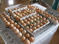 Great article on mini farming.Starting with one chicken and a small garden.
