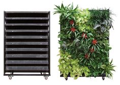 A Growing Wall. Great for inside your home.