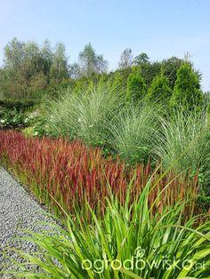 Backyard Landscaping, Modern Landscaping, Coastal Gardens, Ornamental Grasses, Garden Stones, Aquaponics, Dream Garden, Garden Projects, Garden Inspiration