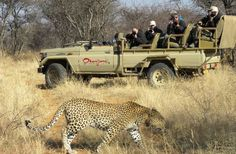 How would you like the freedom of exploring Namibia at your own pace? Windhoek Etosha National Park Damaraland Swakopmund The Namib Desert Do it in style & let us take care of the logistics > Bbc Presenters, Namib Desert, Game Reserve, Self Driving, Nature Reserve, Big Cats, Conservation, Animal Pictures, Trip Advisor