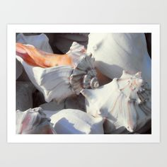 This is an original photograph of sea shells in sunlight and shadow. The beautiful conch shells are in shades of white on the outside, with pale, pinkish brown lines spiraling softly down from the top of the shells. One shell's interior reveals its light salmon pink color, and we can see hints of this color in some of the shadows. Other shadows have a tint of blue.
