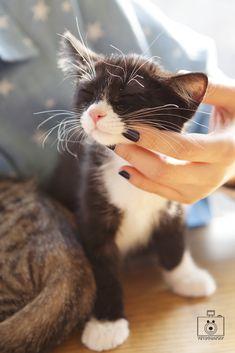 Cats love a good chin rub. Kitten - cute - cat