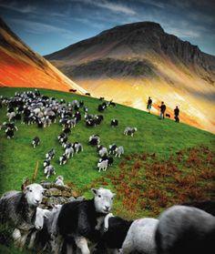 Herding Together – Row Head, Wasdale Head