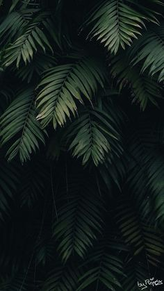 Top 25 iPhone Wallpapers of 2018 Leaves Wallpaper Iphone, Original Iphone Wallpaper, Plant Wallpaper, Tropical Wallpaper, Screen Wallpaper, Aesthetic Iphone Wallpaper, Aesthetic Wallpapers, Walpaper Iphone, Wallpaper Jungle