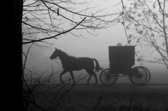 Horse and Carriage Ride.
