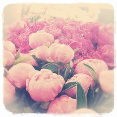 Pink peonies. @veeveeann-#statigram