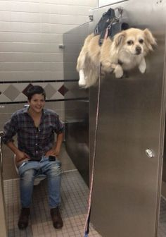Hang Your Dog On a Door Hook When Going to the Bathroom in a Public Restroom ---- hilarious jokes funny pictures walmart humor fails