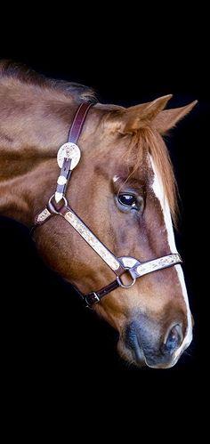 equine horse community