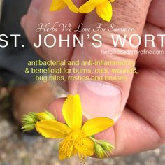 Herbs to love for summer -- st john's wort health benefits