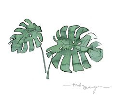 - Monstera deliciosa - Minha planta favorita! #art #illustration #drawing #draw #watercolor #inktober #artist #sketch #sketchbook #paper #pen #pencil #artsy #instaart #beautiful #instagood #gallery #masterpiece #creative #photooftheday #instaartist #aquarela #monstera #artoftheday #print #simplicity #minimalism