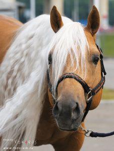 КК Валентина - клубы - equestrian.ru