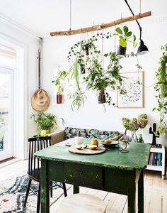 Des plantes suspendues.