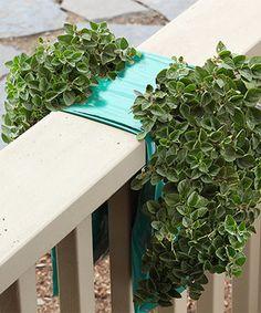 Look at this #zulilyfind! Organic Italian Oregano Hanging Garden #zulilyfinds