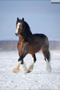 Vladimir horse