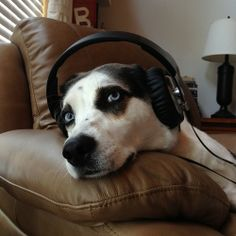 your dog when listening to music. so smart & funny. #funny #funnypics #funnypictures #awesomepics You may want to visit this site too! http://www.pinterest.com/travelfoxcom/pins/