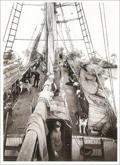 The Endurance - Shackleton - Google Search