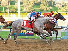Teebster, 5 year old grey gelding by Tapit euthanised for injuries sustained during race