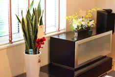 住宅展示場の開店祝に観葉植物 サンスベリア