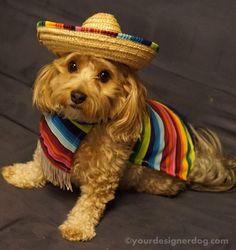 Caballero - Halloween Costumes for Dogs  - YourDesignerDog