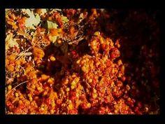 ▶ Woodland Ray Mears Wild Food E5 part 2 - YouTube